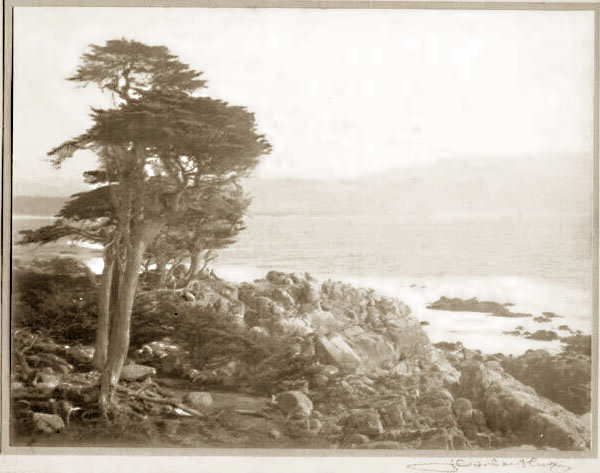 leopold hugo, monterey cypress trees,  photo #96-025-0002